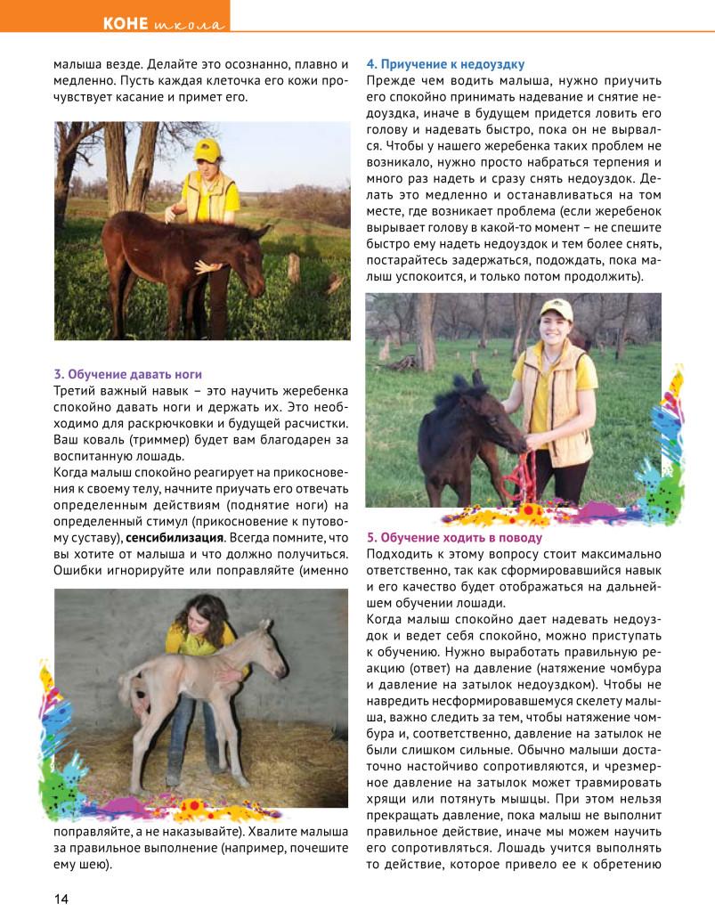 Book коневодитель4 2017-14